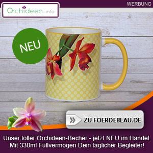 Kaffeetasse mit schöner Orchideen-Blüte